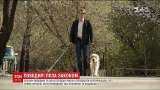 Державі задорого забезпечувати незрячих українців собаками поводирями