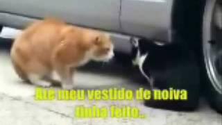 BRIGA DE CASAL _ GATA BRAVA - Family squad  CATS