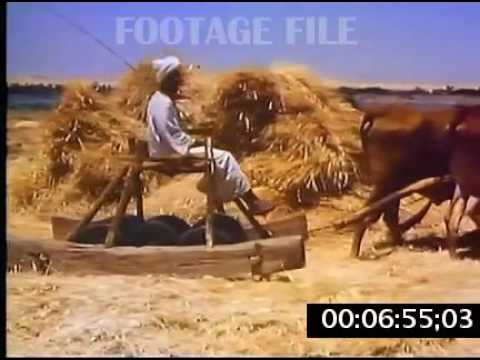 Stock Footage: Egypt, Rural Life, 1970s #8288