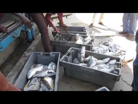 Somaliland FISHING industry