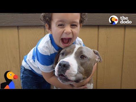Pit Bull Dog is Boy's Best Friend & Nanny | The Dodo