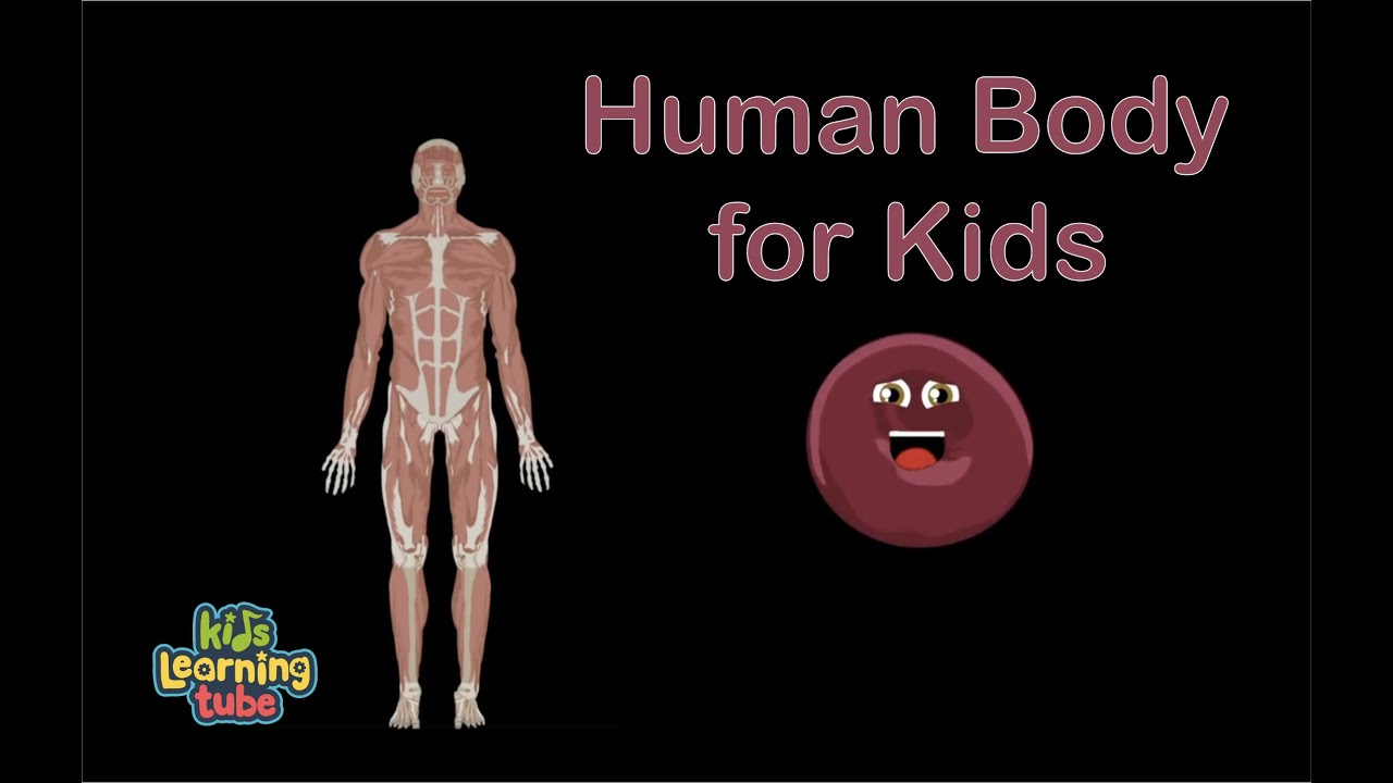 Human Body Anatomy Song for kids/Anatomy for kids