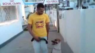 schutzhund obedience with pit bull (Balabanov Method) thumbnail