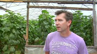 видео: Rost-концентрат 2011.mov