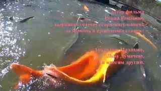 видео: Воронежский золотой осетр