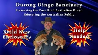 Durong Dingo Sanctuary Donations Thumbnail