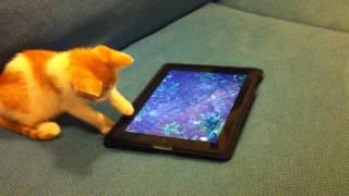 Kitten plays with an iPad thumbnail