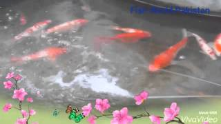 ornamental fish hatchery
