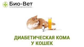 Диабетическая кома у кошек. Ветеринарная клиника Био-Вет.