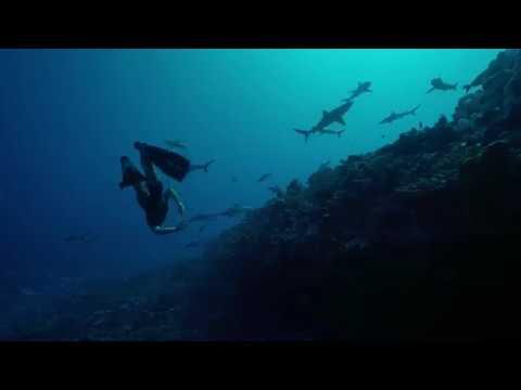 Offshore film festival 2018 - Teaser plongée