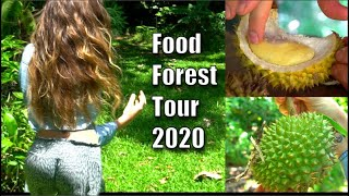 Food Forest Off Grid Tour 2020 / freshly fallen durian!