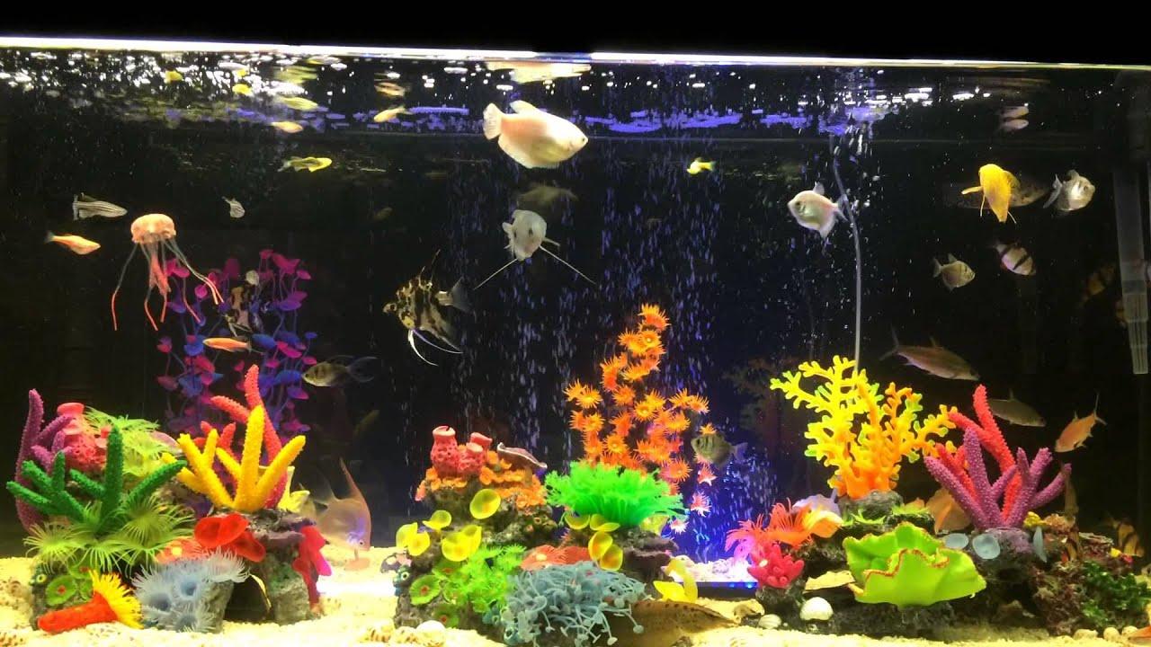 Acuario con peces tropicales de agua dulce youtube for Peces de acuario agua dulce fria