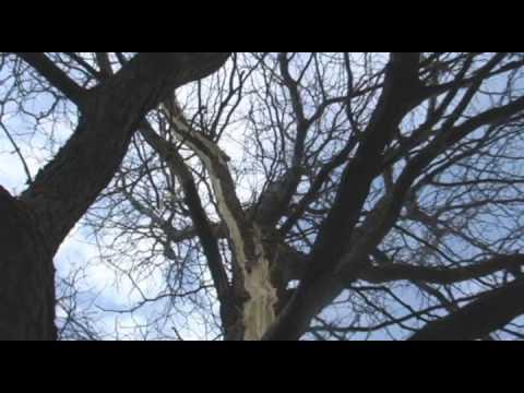 lighting hits a Tree