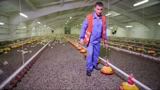 Экологическая безопасность в МХП: очистка сточных вод и ультрафиолетовое обеззараживание