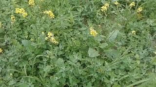 Mechanizmy odporności roślin na patogeny