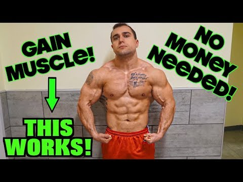 How to Make a Muscle Building Workout Program For Free