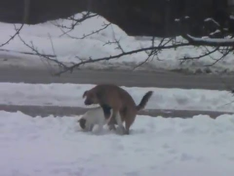 poor little dog day 3 gay dogsиз YouTube · Длительность: 1 мин19 с