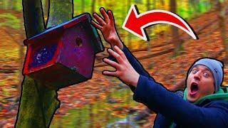 TRAZIM PTICE ZA SVOJU KUĆICU!!! *izgubio se u šumi*