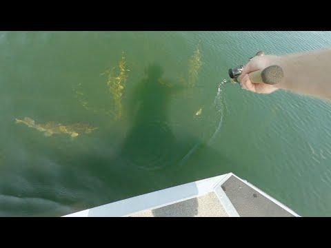 Beers Lake, MN, Muskie Fishing