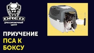 Как приучить собаку к транспортировочному боксу | Дрессировка собак Буча Ирпень