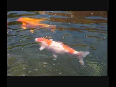 Comment lutter contre les algues dans le bassin? - YouTube