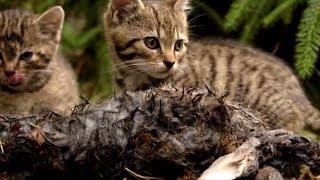 Во время прогулки в лесу мужчина обнаружил диких маленьких котят. Но как оказалось