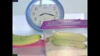 米缸可把香蕉催熟嗎_鳳溪廖潤琛紀念學校_縮時攝影專題研習比賽