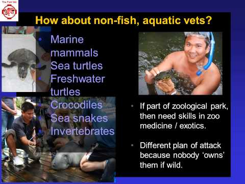 Roles for Veterinarians in Aquatic Veterinary Medicine and the paths to your dream career.