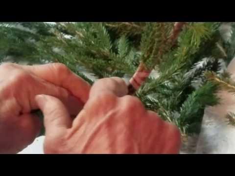 Conifer Grafting - Tying Off
