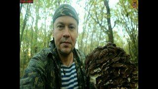 Гриб - баран (или грифола курчавая, Grifola frondosa): редкий, вкусный, большой