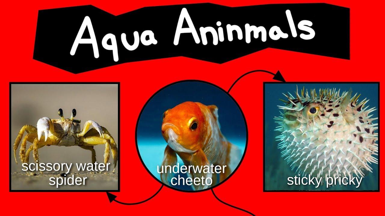 Internet Names for Aqua Aninmals - YouTube