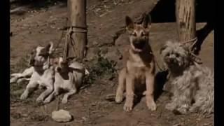 Pete und die Hundefänger