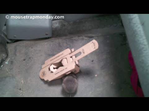 Thumbnail: Does a Mouse Trap Made Out Of Recycled Cardboard Really Work? EVO Trapz In Action.