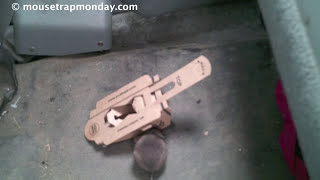 Does a Mouse Trap Made Out Of Recycled Cardboard Really Work? EVO Trapz In Action.