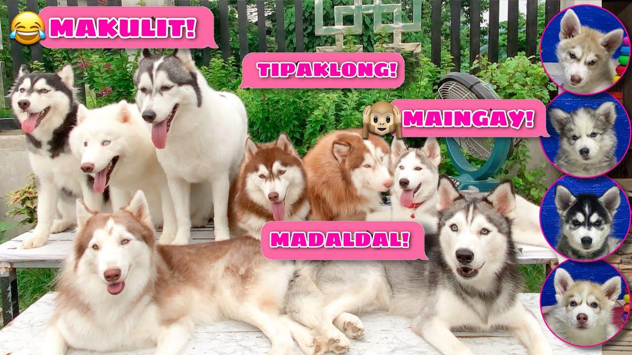 Each Husky Pack Member's Personality | Husky Pack TV