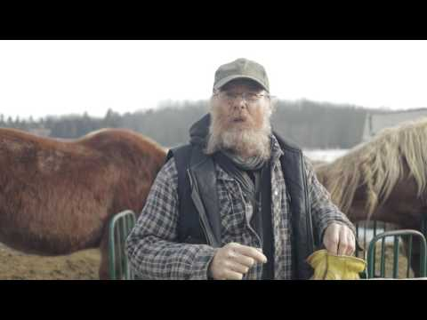 Horse Allergies/Asthma: A Natural Solution