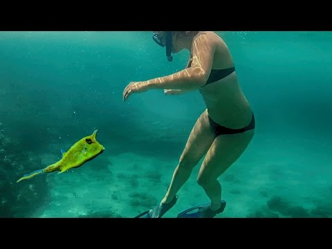 SNORKELING VACATION ON AMAZING CARIBBEAN TROPICAL ISLAND! VACACIONES SNORKEL en la ISLA TROPICAL!