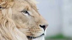 Vorsicht: Höhle der Löwen Bitcoin Trading ist eine dreiste Abzocke