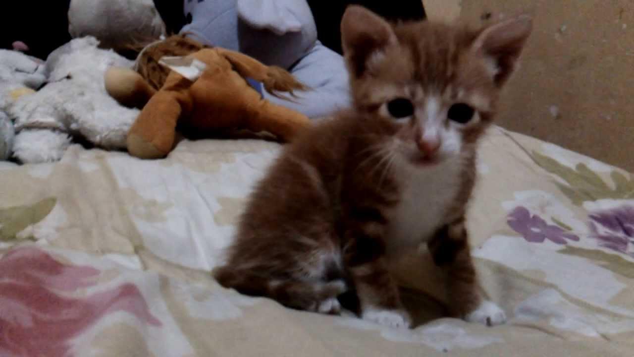 El gato m s tierno del mundo un mes de vida youtube - Gatitos de un mes ...