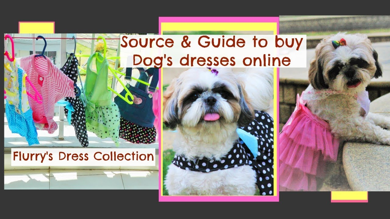 How To Buy Dresses Online For Dogs Best Source To Buy Pet Clothes