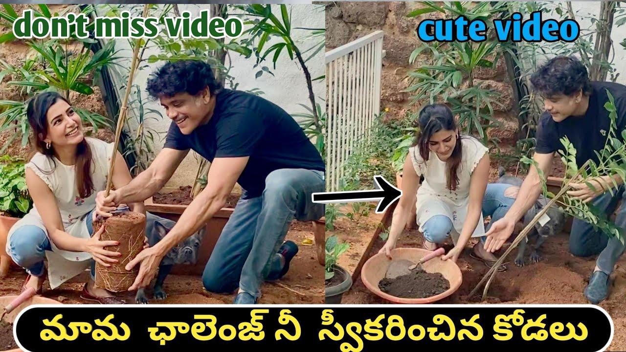 |Akkineni Nagarjuna Samantha Green India challenge successfully completed 2020 by star Muchatlu|