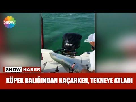Köpek balığından kaçarken, tekneye atladı
