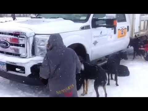 JR - massaging the dogs after Alpine run