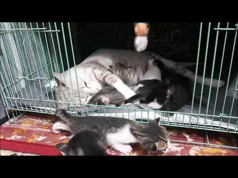 6 Kitten Cat, 20 days old cute kittens