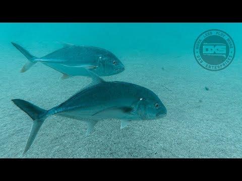 A trip to Fafa Island in Tonga