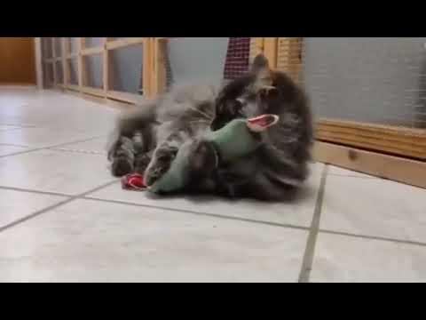 Katteleg.com - Nuldrepude/duftpose