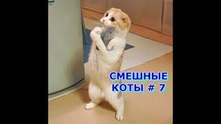 Приколы с кошками и котами #7. Подборка смешных и интересных видео с котиками и кошечками 2017