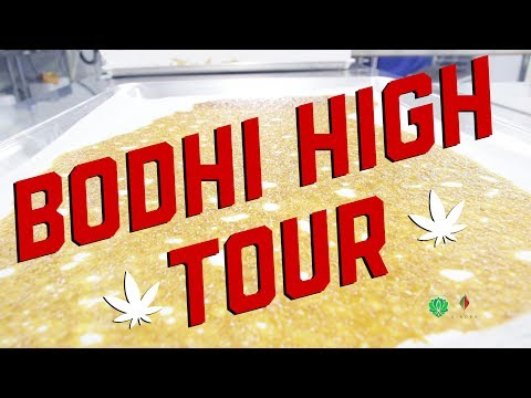 Bodhi High Tour