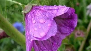 Soft rain sounds for 10 minutes