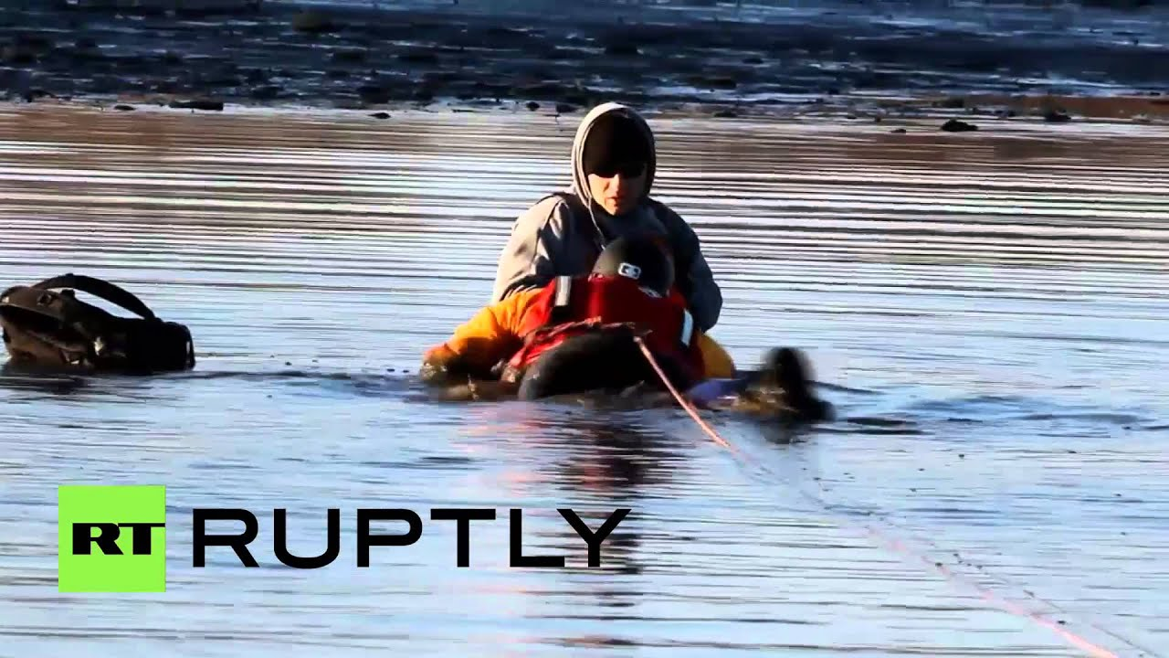 USA: Real-life Lassie? Dog rescues owner stuck waist-deep in mud